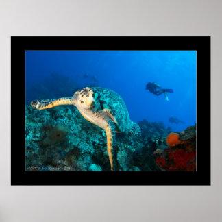Cozumel - tortuga #7 - 11-2009 impresiones