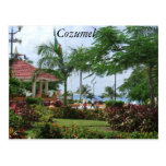Cozumel Tropical Palm Tree Post Cards