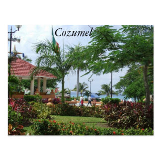 Cozumel Tropical Palm Tree Postcard