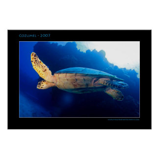 Cozumel - Turtle in the Sun Poster