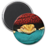 Cozy Bearded Dragon 2 Inch Round Magnet