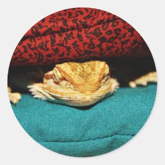 Cozy Bearded Dragon Classic Round Sticker