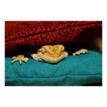 Cozy Bearded Dragon Poster