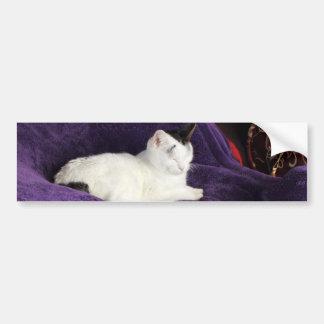 Cozy Cat Kitty Napping Happy Bumper Sticker
