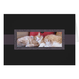 """Cozy cats.  Thinking of """"us"""" Card"""
