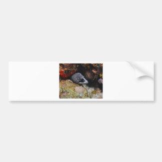 Cozy Eel Bumper Sticker