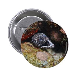 Cozy Eel Pinback Button