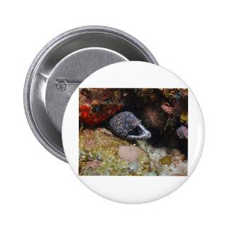 Cozy Eel Button