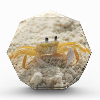 Crab Acrylic Award