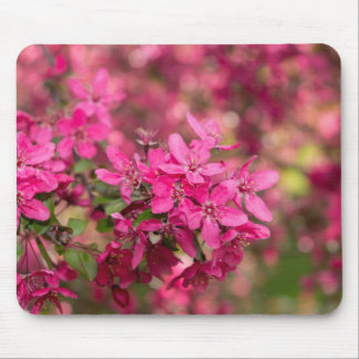 Crab Apple Blooms Mouse Pad