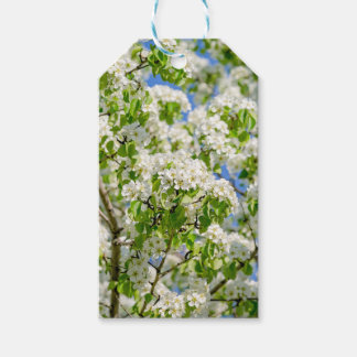 Crab apple blossom gift tags
