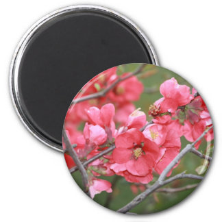 Crab Apple Blossoms 2 Inch Round Magnet