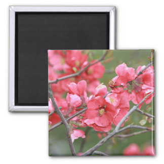 Crab Apple Blossoms 2 Inch Square Magnet