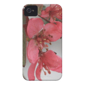 Crab Apple Blossoms iPhone 4 Cover