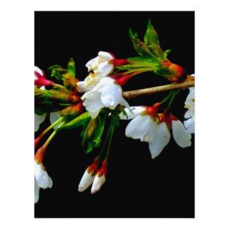 Crab-apple blossoms letterhead