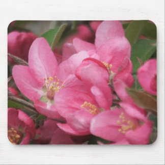 Crab Apple Blossoms Mouse Pad