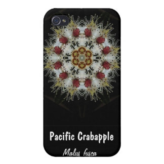Crab Apple Blossoms, Pacific Crabapple, Malus f... iPhone 4/4S Case