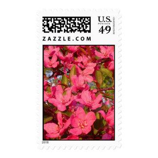 Crab Apple Blossoms Stamp