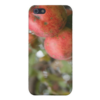 Crab Apple iPhone Case