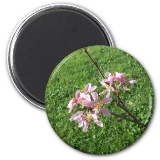 Crab Apple Tree Blossoms Magnet