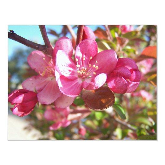 Crab Apple Tree in Bloom Card