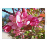 Crab Apple Tree in Bloom Greeting Cards