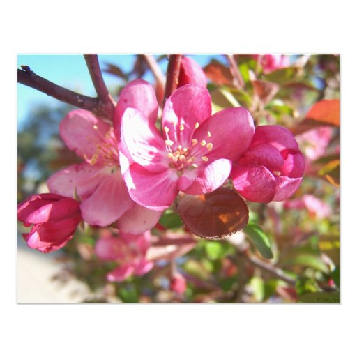Crab Apple Tree in Bloom Personalized Invitations