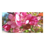 Crab Apple Tree in Bloom Photo Card