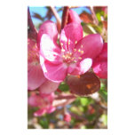 Crab Apple Tree in Bloom Stationery Design