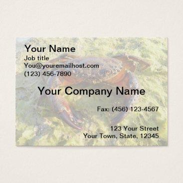 Professional Business Crab Business Card - Eriphia verrucosa