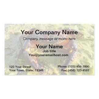 Crab Business Card - Eriphia verrucosa