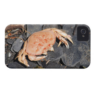 Crab iPhone 4 Cases
