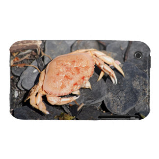 Crab iPhone 3 Case