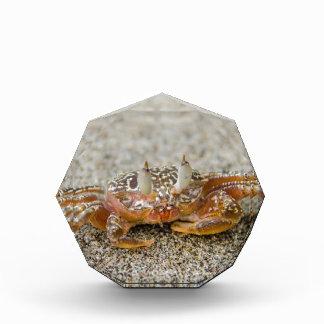 Crab claws acrylic award
