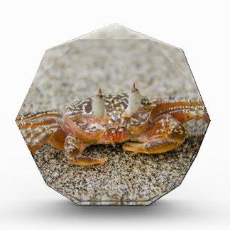 Crab claws award