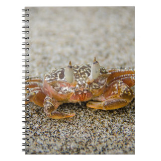 Crab claws notebook