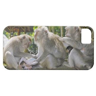 Crab-eating Macaque, Macaca fasciularis, in Ubud iPhone SE/5/5s Case