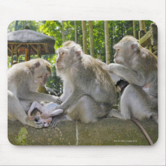 Crab-eating Macaque, Macaca fasciularis, in Ubud Mouse Pad