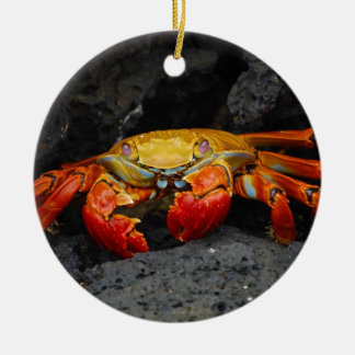 Crab Grapsus Grapsus From The Galapagos Islands Ceramic Ornament