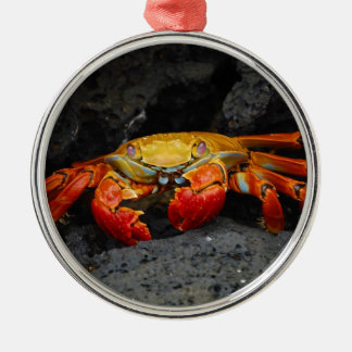 Crab Grapsus Grapsus From The Galapagos Islands Metal Ornament