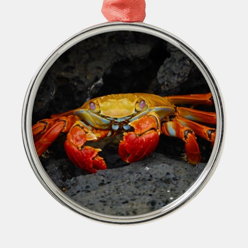 Crab Grapsus Grapsus From The Galapagos Islands Christmas Tree Ornament