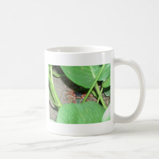 Crab hiding coffee mug