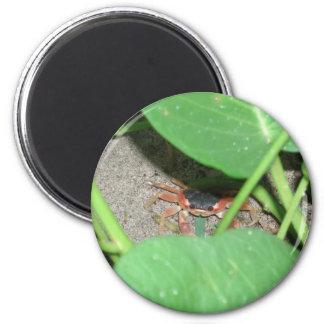 Crab hiding magnet
