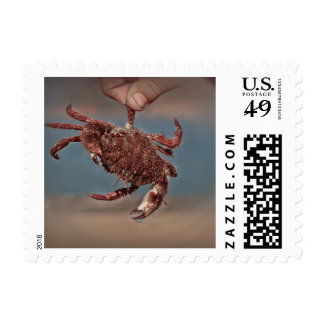 Crab on a postage stamp