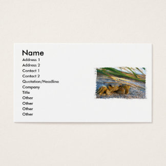 Crab on beach dune at sunset business card