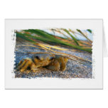 Crab on beach dune at sunset cards