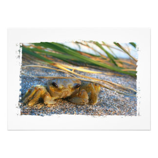 Crab on beach dune at sunset personalized invitations
