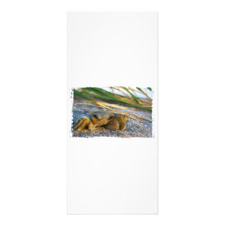 Crab on beach dune at sunset personalized rack card