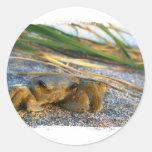 Crab on beach dune at sunset round stickers