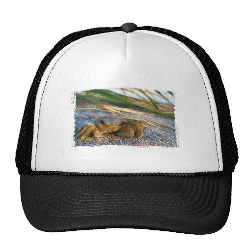 Crab on beach dune at sunset trucker hat